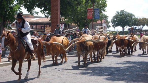 Cattle drive at Fort Worth Stock Yards