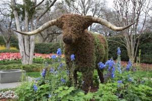 Texas Longhorn!