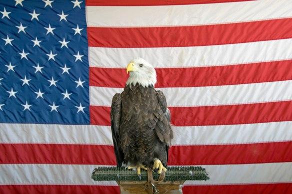 DFR_BaldEagle&Flag