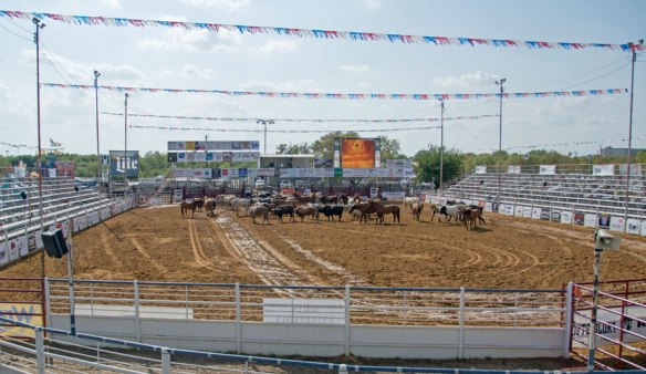 The Rodeo Arena