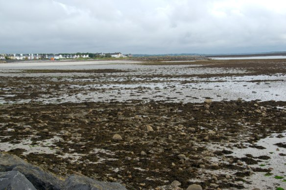 The tides out at Galway Bay