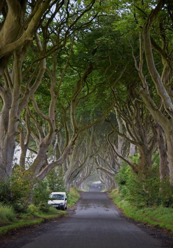 Ireland_darkHedges