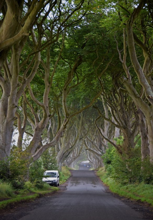 Ireland_darkHedges
