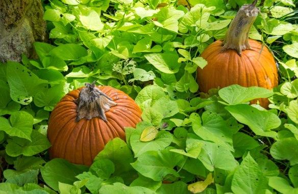 Fall_PumpkinBed