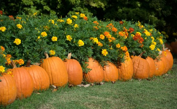 Fall_PumpkinPath