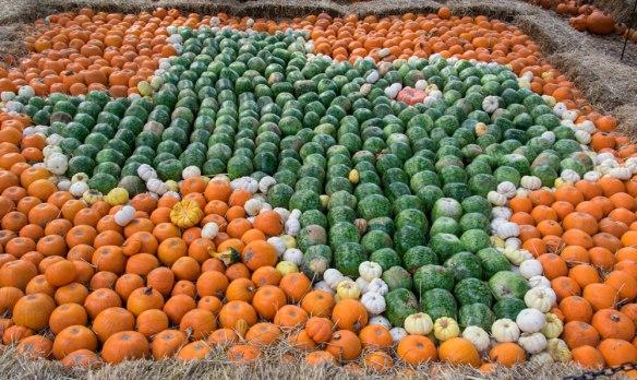 Fall_Texas_pumpkins
