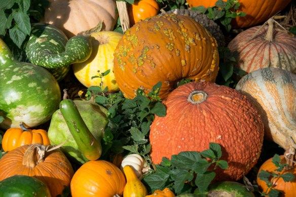 Fall_UglyPumpkinPatch