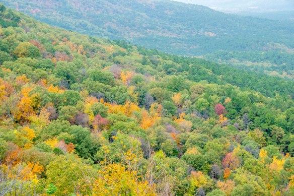 Talimena_AutumnColour_0976