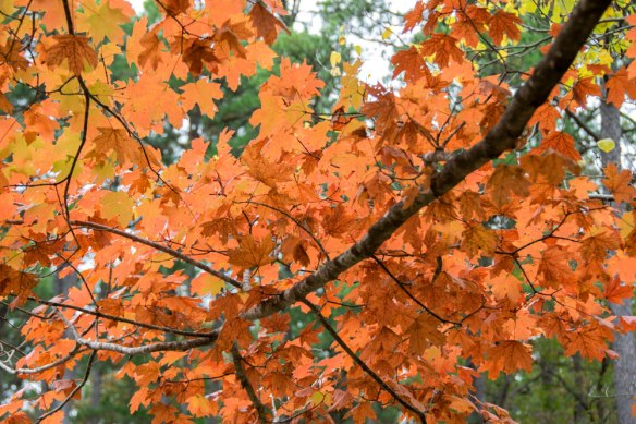 Talimena_AutumnLeaves_0955