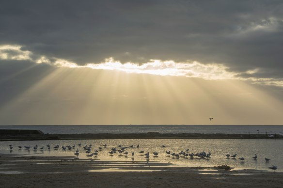 Seagulls_Sunrise_0765